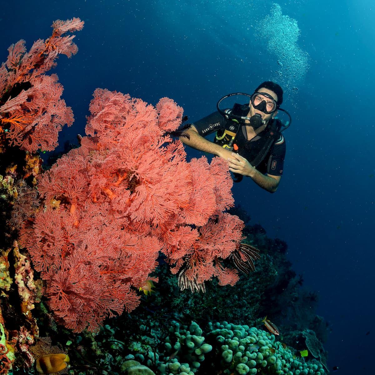 Divemaster Free Fun Diving