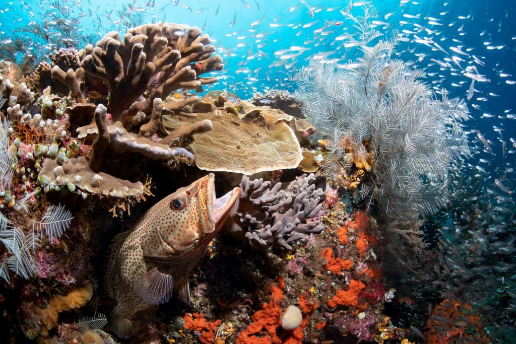 Coral reef formation with the grouper