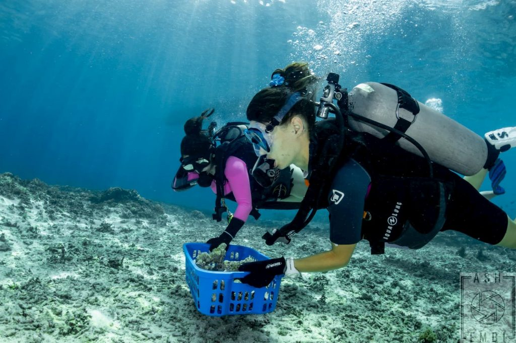 divers getting live rocks for propagation
