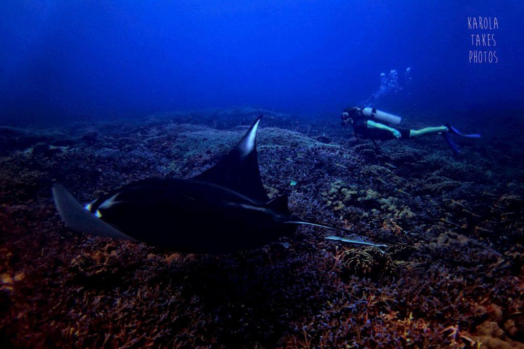 manta ray on a local dive site at gili trawangan