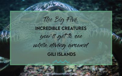 The Big 5 Incredible creatures expected to see while diving around Gili islands.