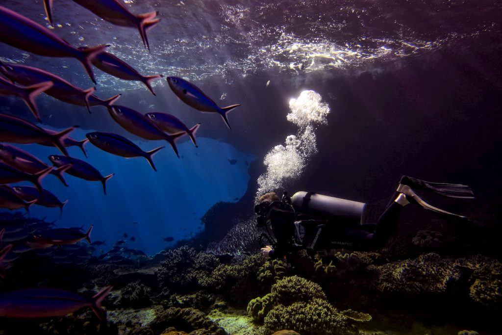 Raja Ampat Diving Underwater
