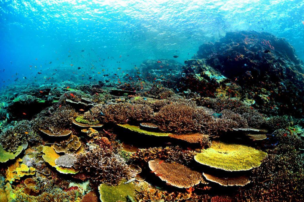 Underwater wildlife indonesia Raja Ampat