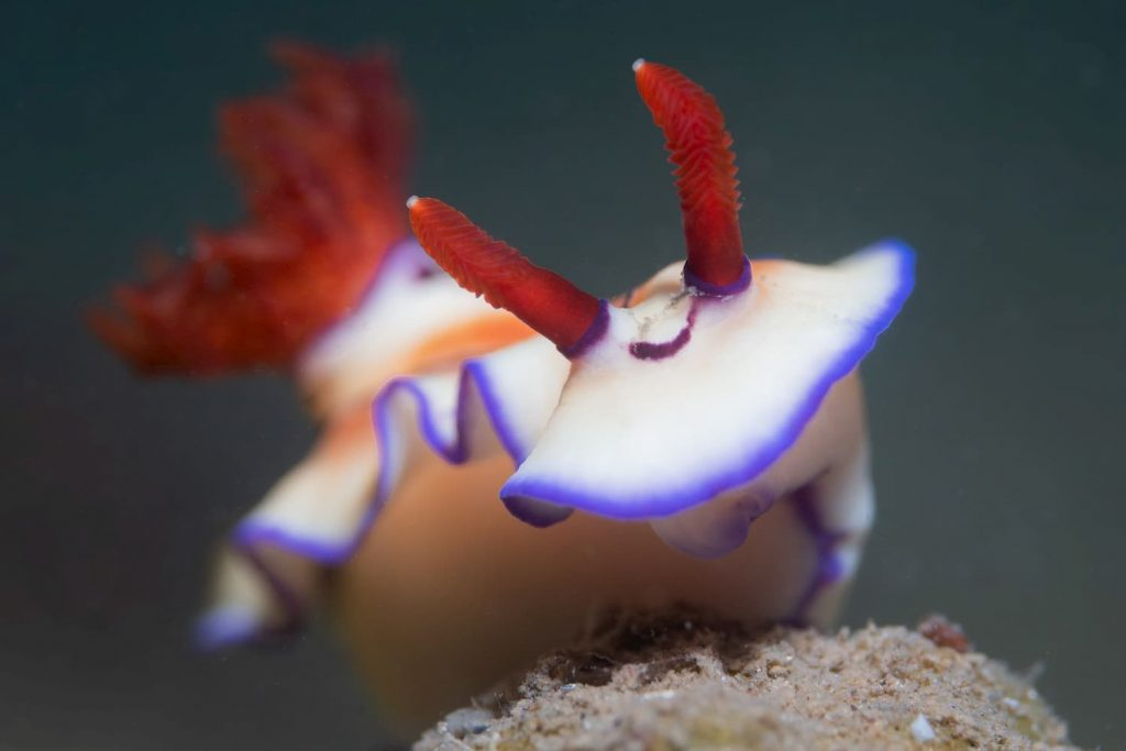 hello from a nudi